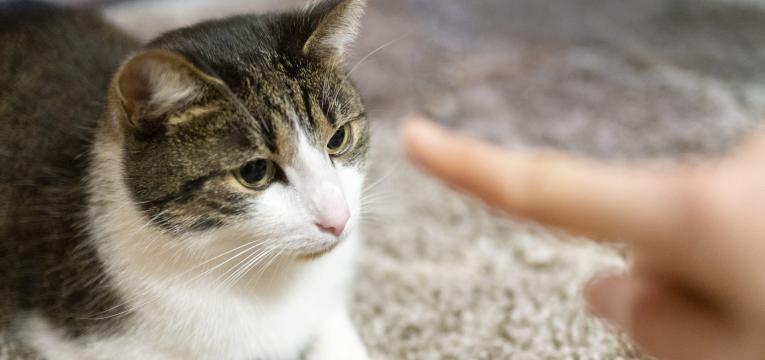 reforco positivo nos gatos dono a ensinar gato