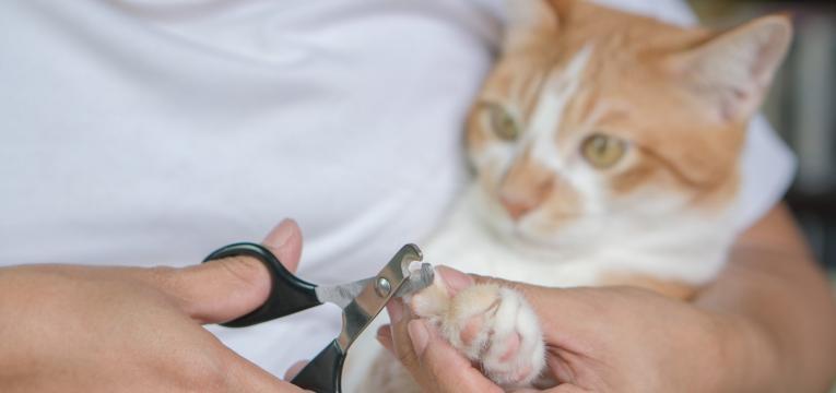 dicas para o gato nao arranhar o sofa cortar as unhas ao gato