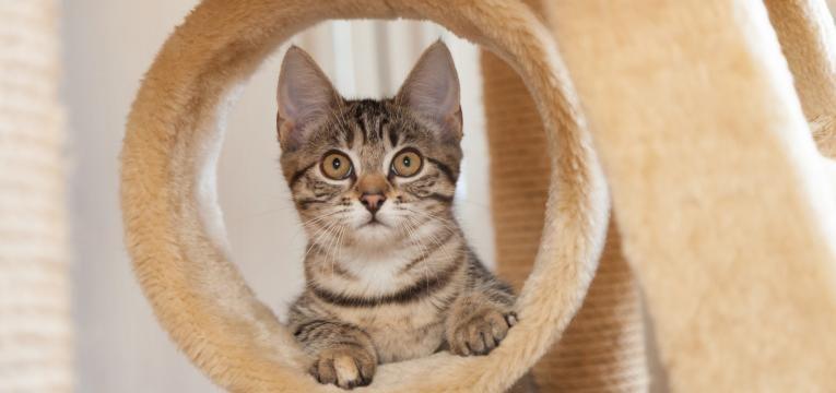 dicas para o gato nao arranhar o sofa gato deitado no arranhador