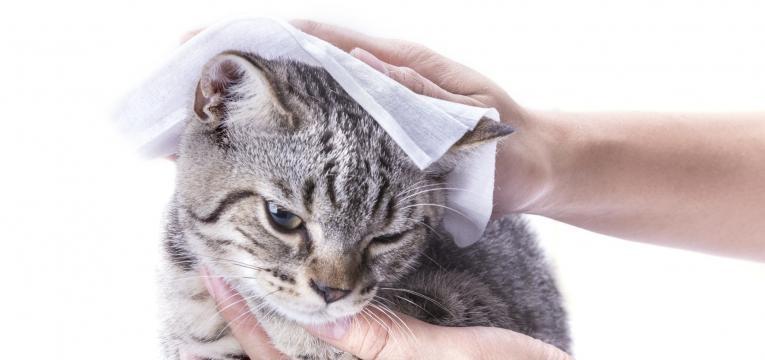 dar banho a gatos limpar o gato com toalhitas