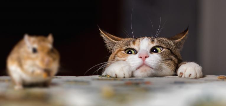 gatos sentem ciumes gato a apanhar rato