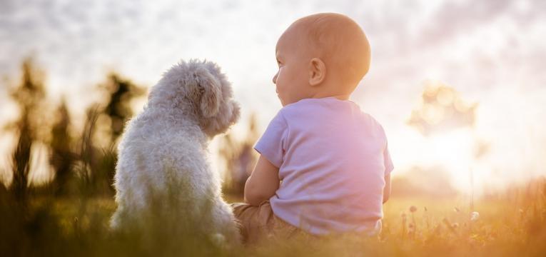 raças de caes para quem tem criancas cachorro e bebe