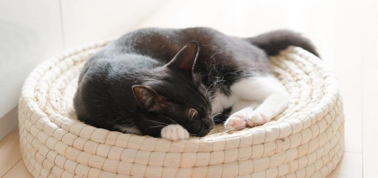 cuidar do gato em idade avancada gato no ninho