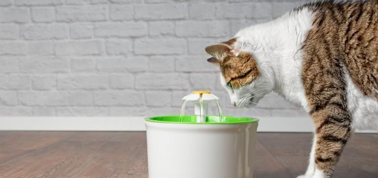 cuidar do gato em idade avancada gato a beber agua na fonte
