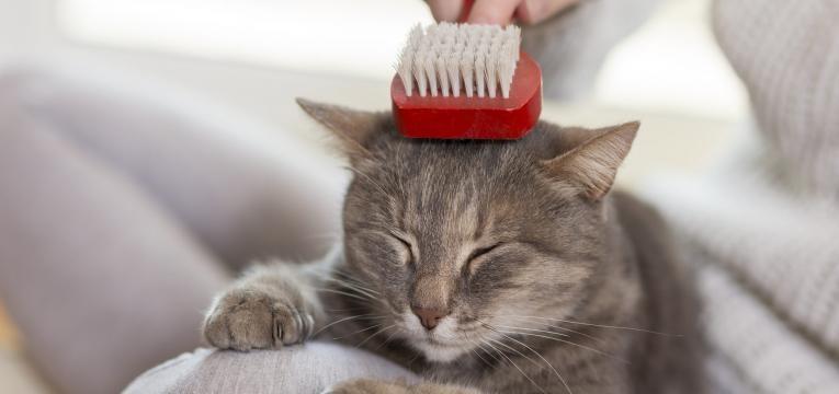 cuidar do gato em idade avancada escovar o pelo do gato