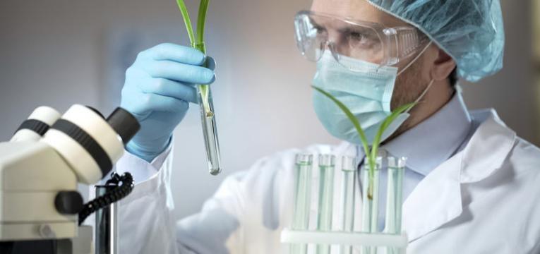extracao de dna em plantas alimentos geneticamente modificados