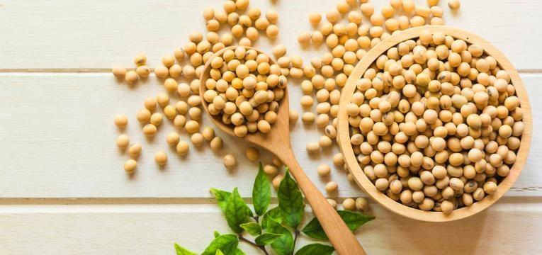 alimentos geneticamente modificados rebemtos de soja
