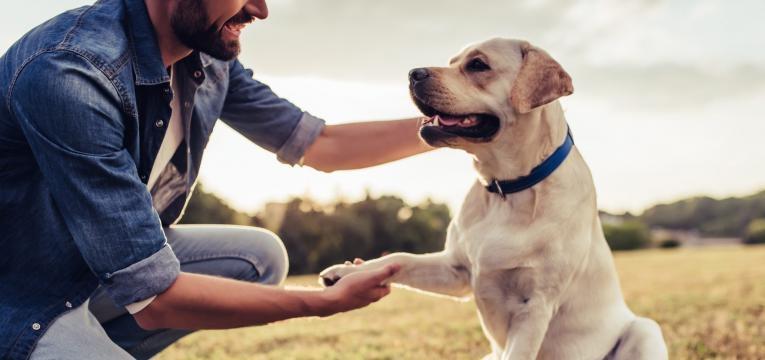 ensinar um cão mais velho