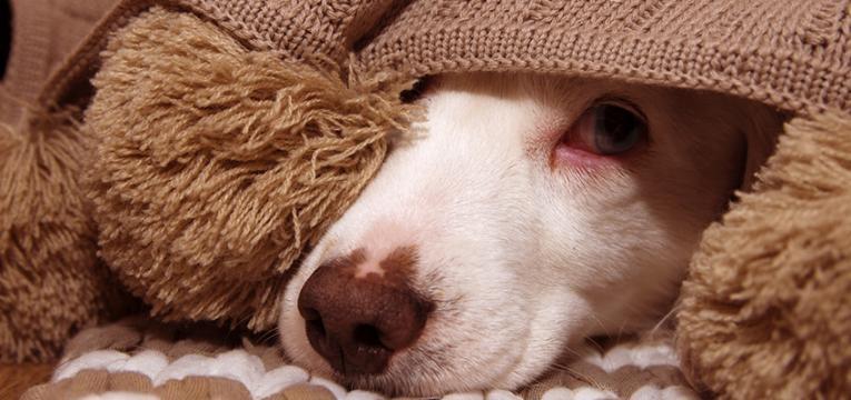 Doenças parasitárias em cães