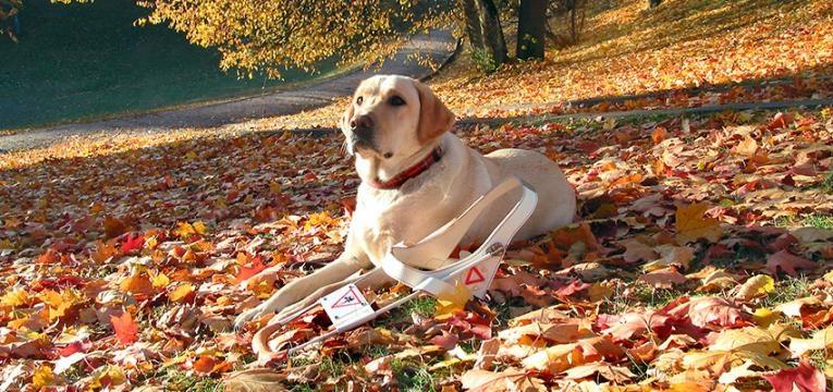Cães de assistência