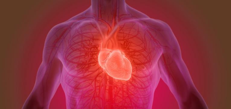o que acontece ao nosso corpo quando deixamos de treinar e cardiovascular