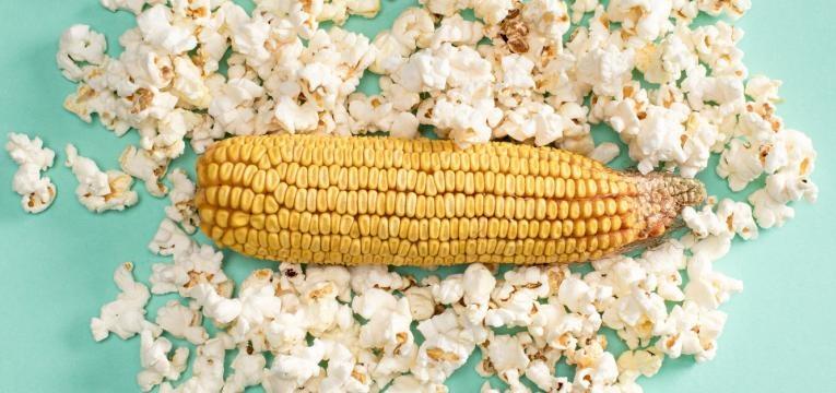 pipocas e milho