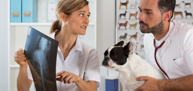 radiografia canina