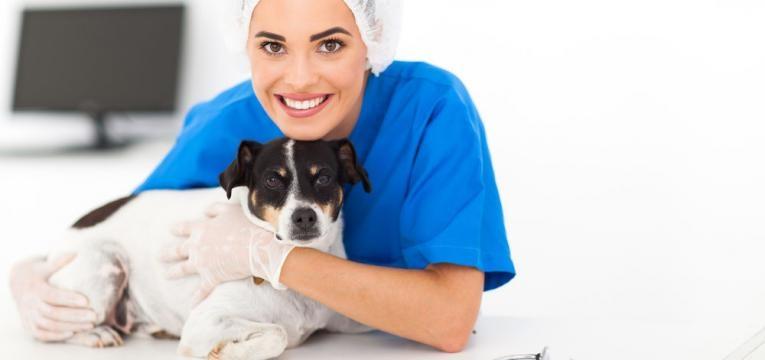 cao e veterinaria