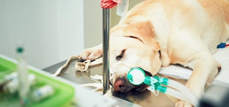cao em tratamento no veterinario