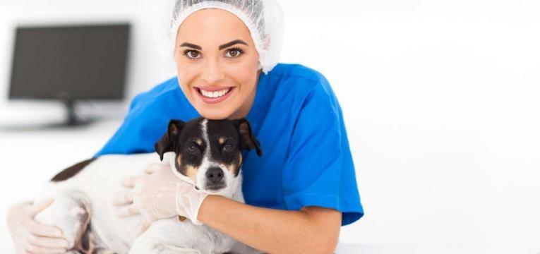 veterinaria e cachorro