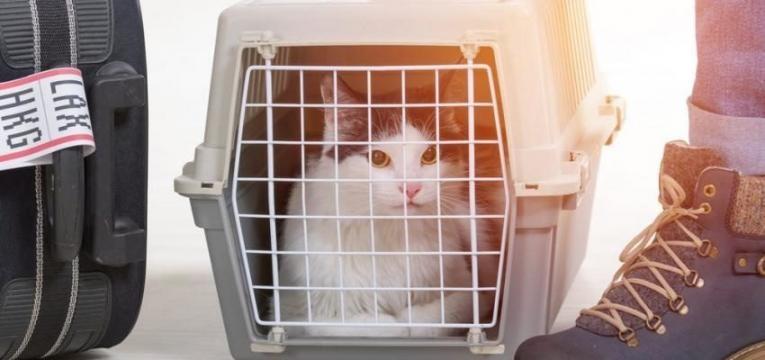 viajar com o seu gato de aviao