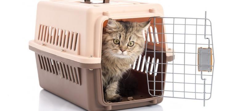 viajar com o seu gato no autocarro