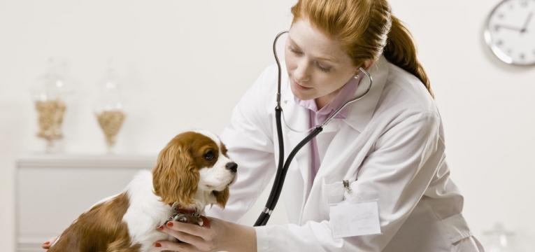 medica veterinaria com cao