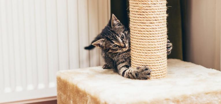 o que deve saber antes de ter um gato e arranhador