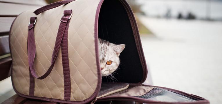 coisas que deve saber antes de ir com o seu gato ao veterinario