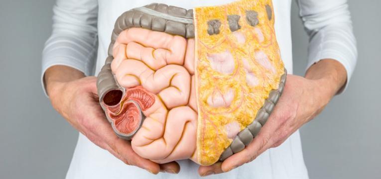Transito intestinal