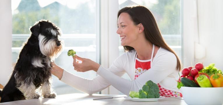 alimentar cao com a propria comida