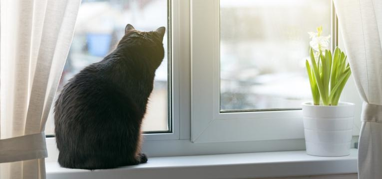 gato a janela