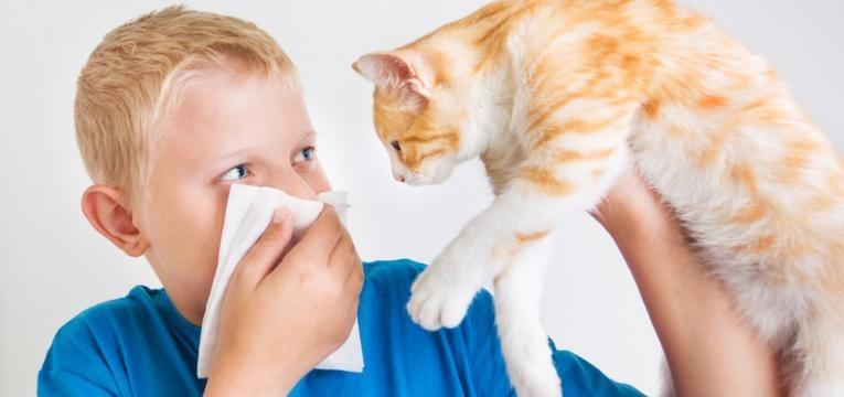 alergias a gato