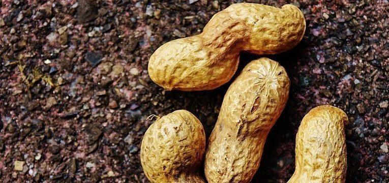 amendoim e zinco