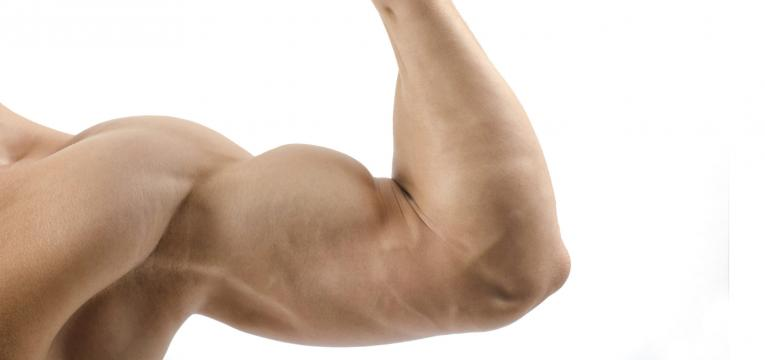 avela e promocao da massa muscular