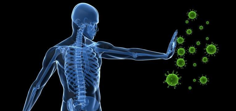 sistema imunitario reforcado