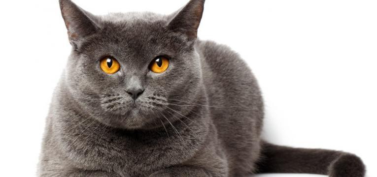 nomes para gatas