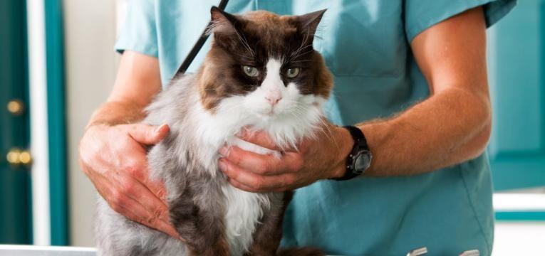 gato no veterinario
