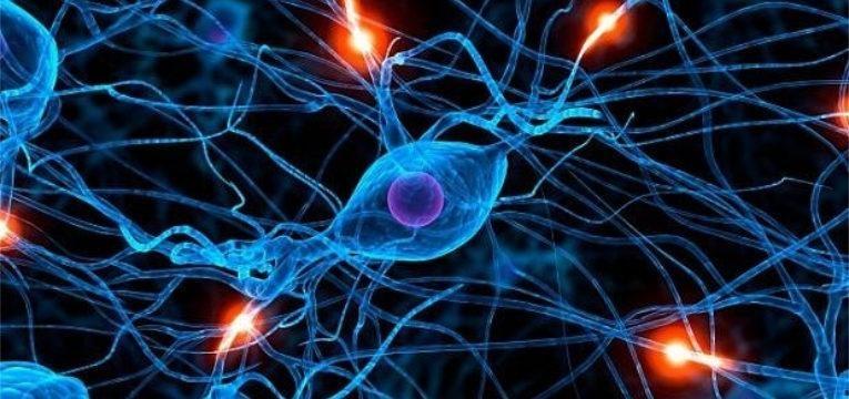 celulas do sistema nervoso