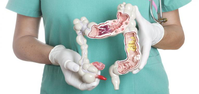 funcao intestinal