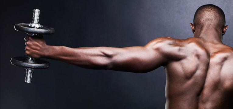 construcao muscular