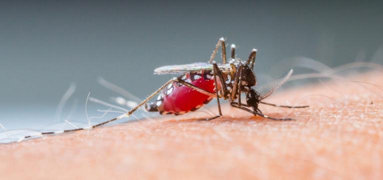 dengue transmissao