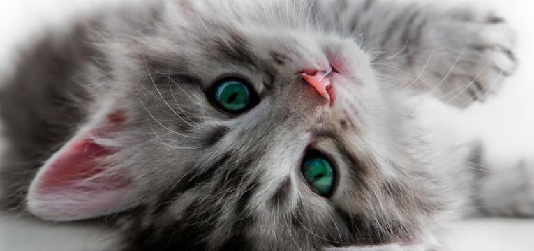 nomes para gatos e gato divertido