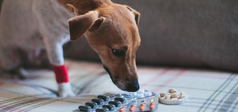 farmacos para o tratamento da leishmaniose