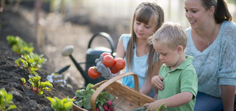 fazer uma horta biologica e atividades para fazer com criancas nas ferias