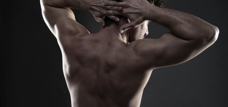 construcao dos musculos