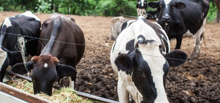impacto ambiental da alimentacao atual