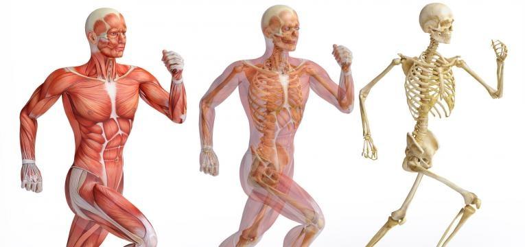 o que acontece ao nosso corpo quando deixamos de treinar e musculoesqueletico