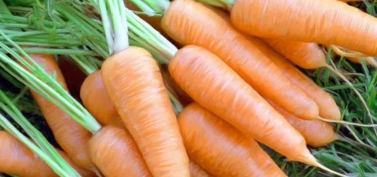 cenoura e saúde do fígado
