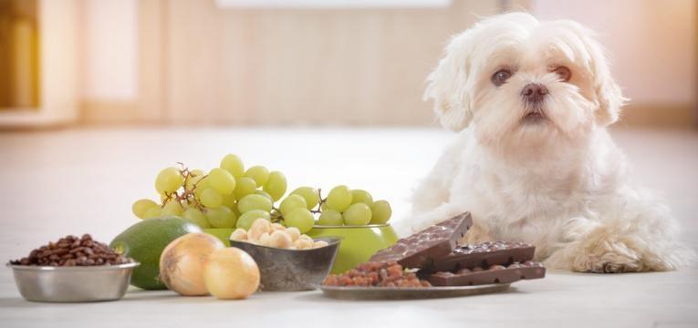 alimentos proibidos para os animais de companhia