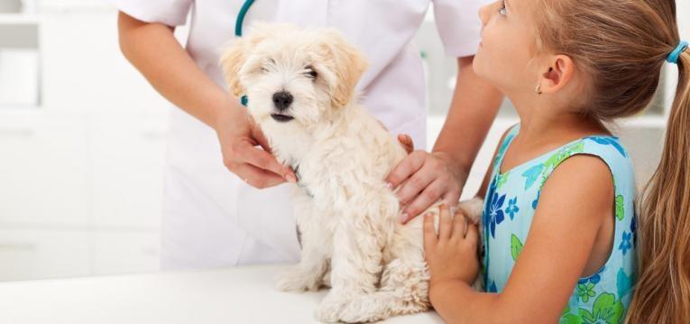 alimentos toxicos para caes e cao no veterinario