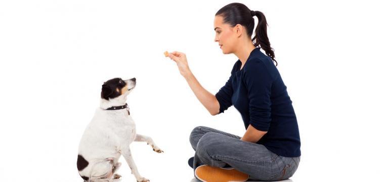 ensinar o cao a sentar com recompensa