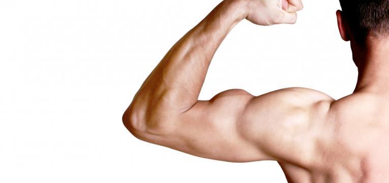 aumento da massa muscular e acido lactico