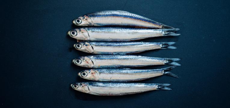anchova e peixe gordo